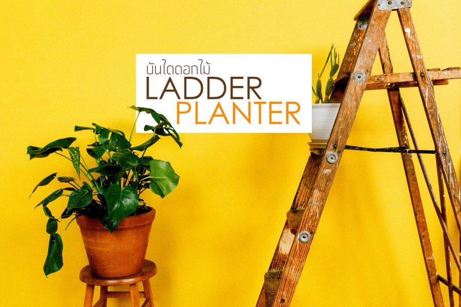 LADDER-PLANTER-บันไดดอกไม้_2