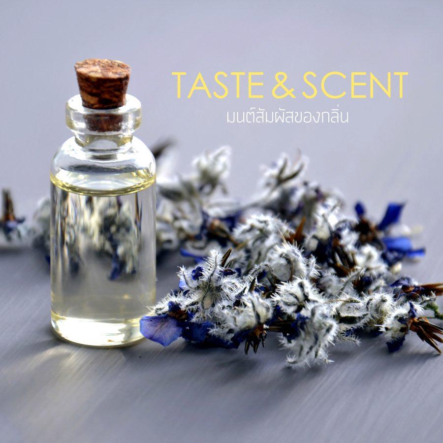 Taste & Scent มนต์สัมผัสของกลิ่น3